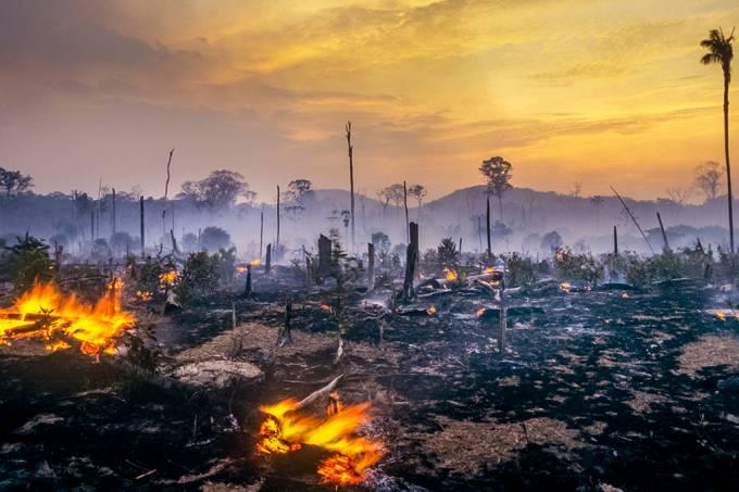 desmatamento_amazonia_site