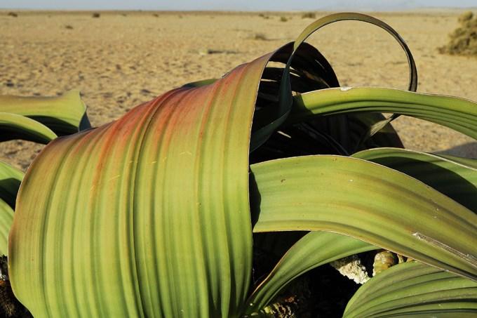 03-08_plantinha_SITE
