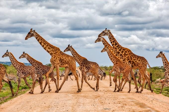 04-08_girafas_SITE