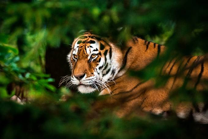 Detecção de DNA no ar pode ser nova maneira de identificar animais selvagens em ambientes hostis
