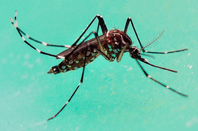 Cientistas usam técnica Crispr para tornar Aedes aegypti 'cego' a hospedeiros humanos