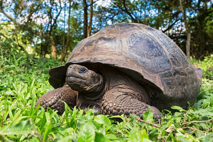 Pela primeira vez, cientistas gravam uma tartaruga caçando. Veja o vídeo