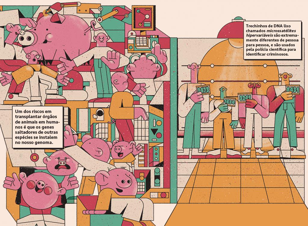Ilustração de genes saltadores que vieram de um porco e genes sendo reconhecidos na delegacia.