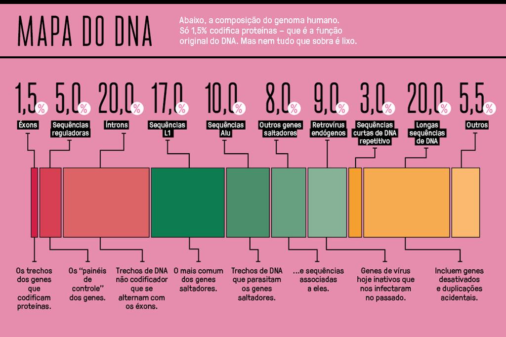 Gráfico de barras mostrando a composição do genoma humano.