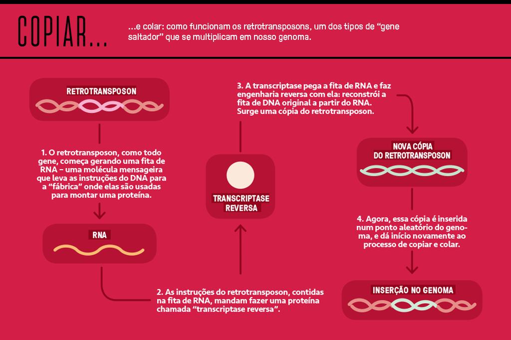 Gráfico mostrando como funcionam os retrotransposons.