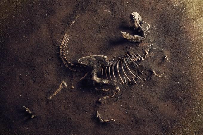 ORCL   Por que há tão poucos fósseis de dinossauro no Brasil?
