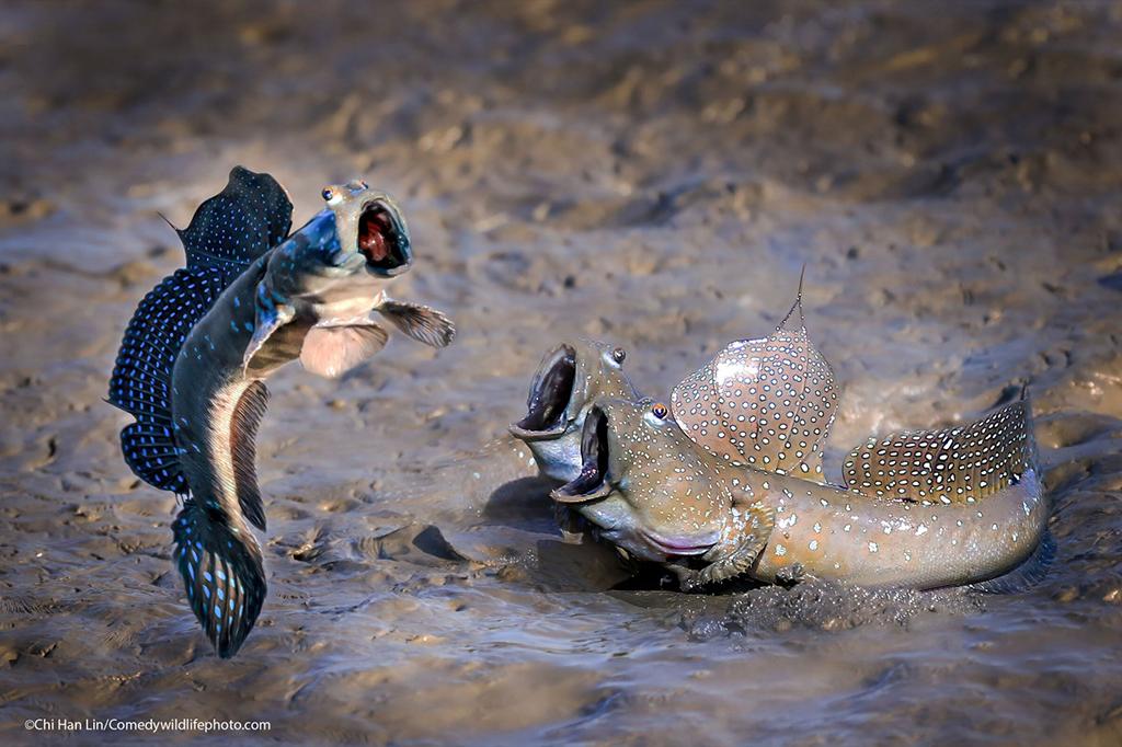 Peixes que parece se apresentar enquanto outros o aplaudem.
