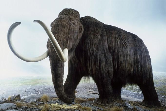 Empresa levanta US$ 15 milhões para tentar ressuscitar mamute extinto há 10 mil anos