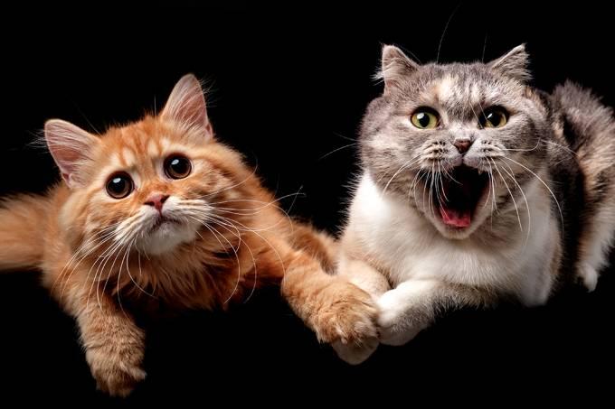 Pesquisadores identificam sete traços de personalidade nos gatos