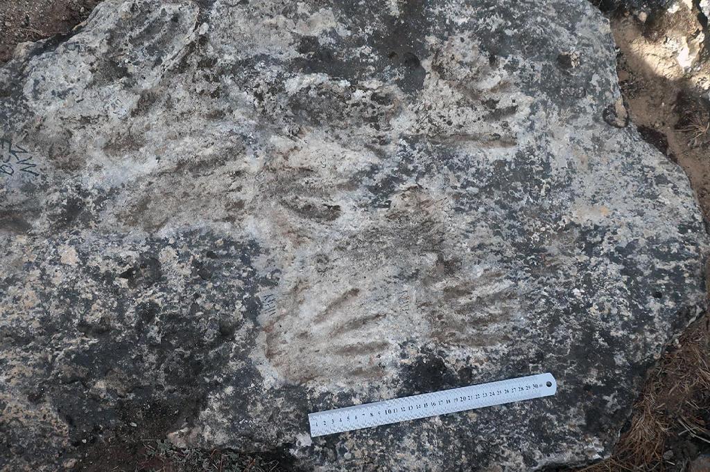 rocha com impressões de pequenas mãos, arte parietal fossilizada
