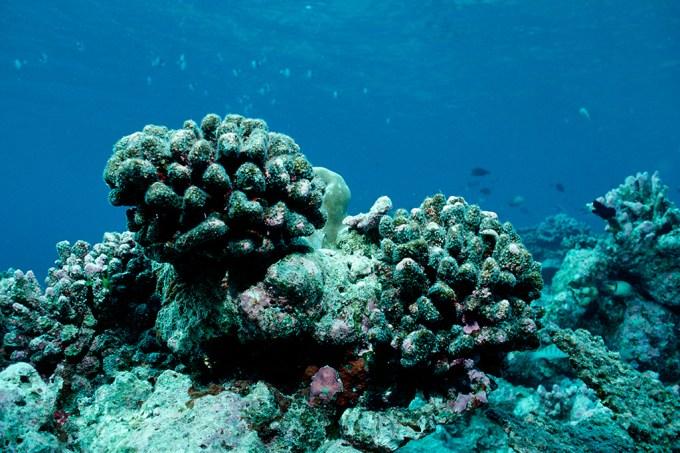 O mundo perdeu 14% de seus recifes de coral na última década, aponta relatório